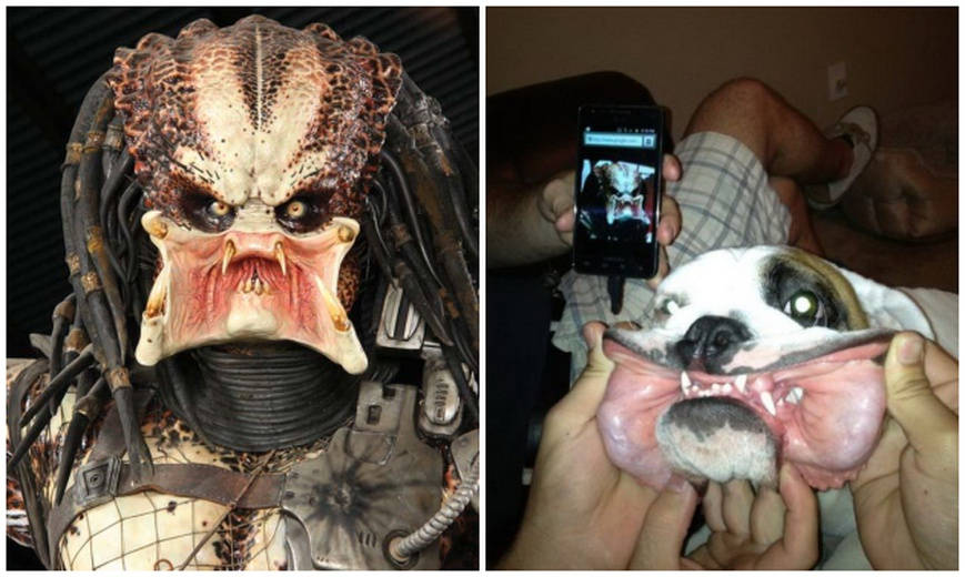 Predator dog defeats Jaws LEGO, Terminator Salvation miniatures, Rob